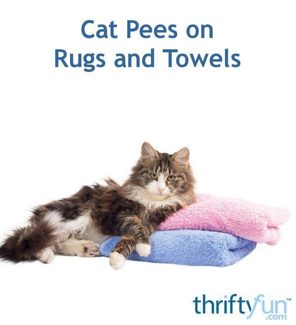 My Dog Peed On My Rug: Cat Pees On Rugs And Towels