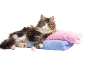 A cat lounging on colorful towels.