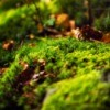 Close-up of moss and leaves in garden bed
