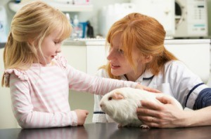 Veterinarian holding guinea pig with little girl petting it