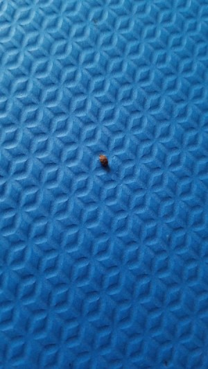 Identifying Bugs in Formal Living Room -