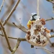 Bagel Bird Feeder hanging from a tree next to a bird.