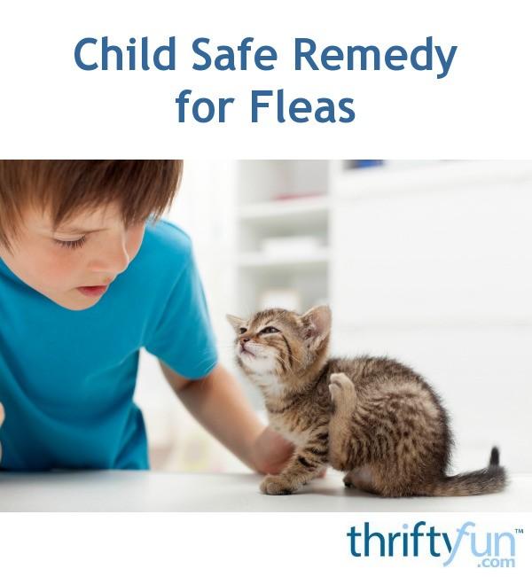 Child Safe Remedies For Fleas Thriftyfun