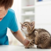 Young boy looking at a kitten scratching itself.