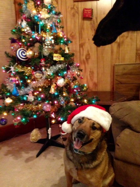 Prince (Mixed Breed) - dog wearing a Santa hat in front of the tree