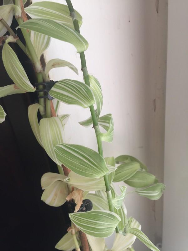 Identifying a Houseplant   ThriftyFun on maine plants identification, flower garden, north texas plants identification,