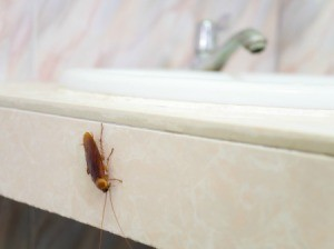 Cockroach on a bathroom counter by sink