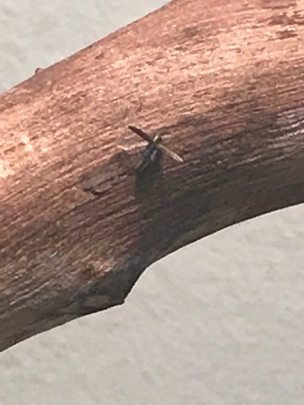 Identifying Small Brown Bugs Thriftyfun