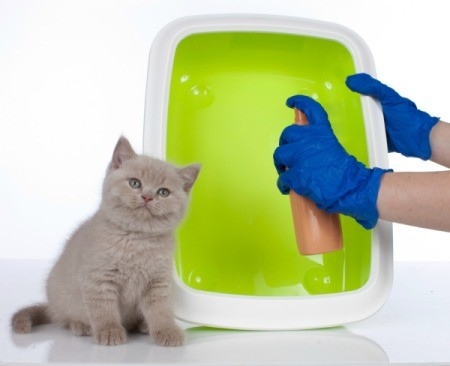 Gloved hands holding and spraying a litter box with a kitten sitting by.