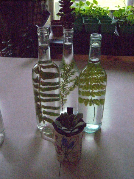 Pretty Botanical Centerpieces - fern bottled and planted succulent