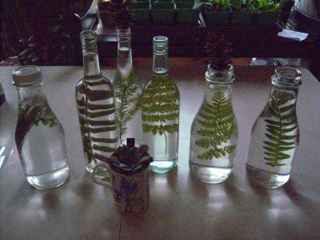 Pretty Botanical Centerpieces - several bottles and potted plant