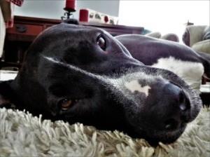 Dog feeling sick laying on floor