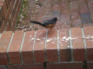 Identifying a Bird