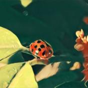 A ladybug on a plant.