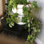 Identifying a Houseplant - potted trailing plant