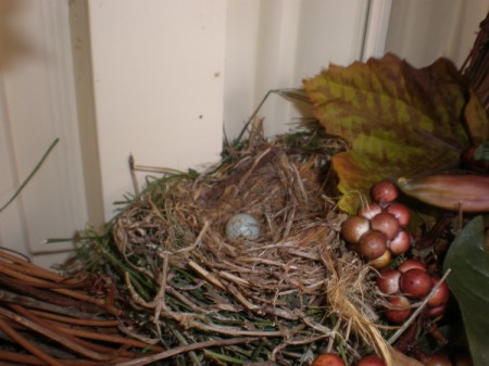 Bird eggs in a nest.