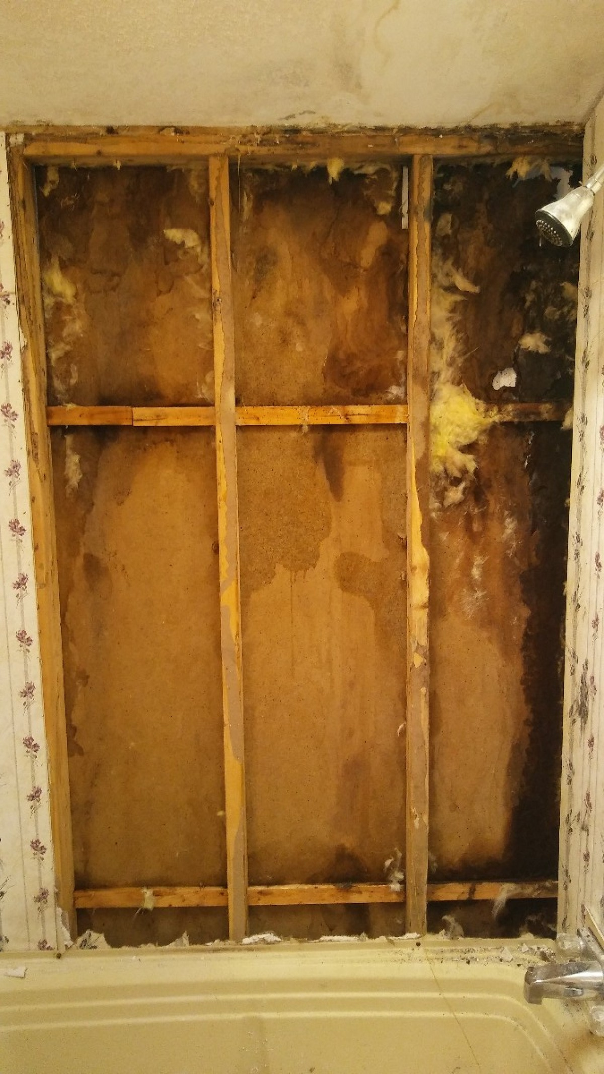 Financial Help To Remove Black Mold And Repair Walls