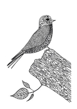 Lunchtime Bird Coloring - song bird