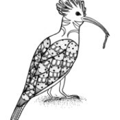 Lunchtime Bird Coloring Pages - bird with long curved beak