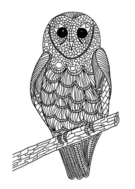 Lunchtime Bird Coloring Pages - owl