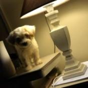 Dog Won't Eat - white puppy