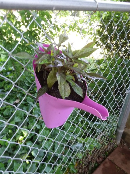 A pink watering can being used as a planter.
