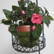 Using Bird Cages As Outdoor Planters - closeup of impatiens potted plant