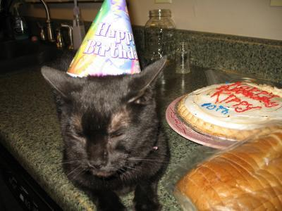 A black cat wearing a birthday hat.