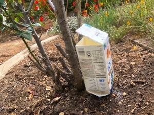 Self-Watering Milk Carton - carton waterer in place