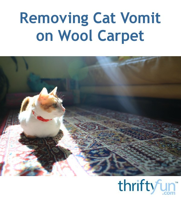 Removing Cat Vomit On Wool Carpet