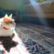 Cat sitting in the sunlight on a wool rug.