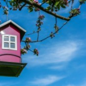 Pink house shaped bird feeder in an apple tree.