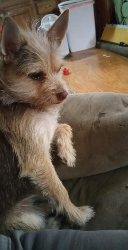 Daisy Duke (Terrier Mix)