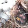 Baby Birds - babies in nest on propane tank