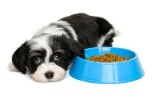 Puppy laying by food bowl not eating