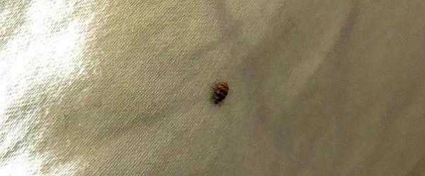 Identifying Household Bugs Thriftyfun