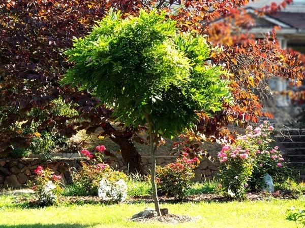 Mini Garden Tour - wisteria standard