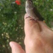A Big Bug? No a Hummingbird!