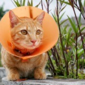 Orange cat with orange cone around it's head.