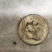 Identifying a Tiny Black Bug - bug next to a dime