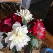 Debra's Peonies - white peonies in vase with red roses
