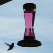 Hummingbird Silhouette - hummer at hanging feeder