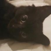 What Breed Is My Kitten? - black cat