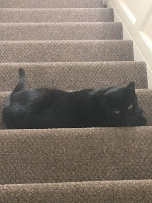 My Cat Is Afraid of Me