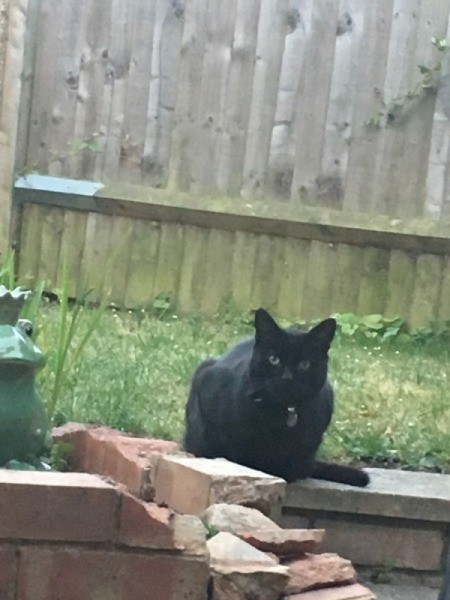 My Cat Is Afraid of Me - black kitty outside