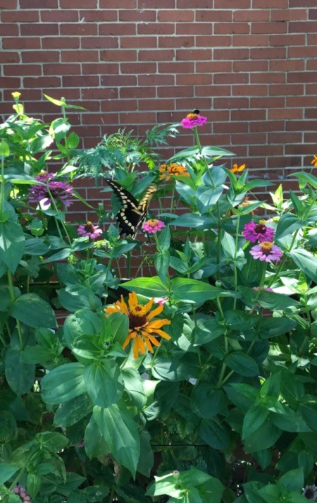 Box of Blooms and Butterflies - black and yellow butterfly on flowers