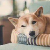 Cute dog laying on a pet bed.