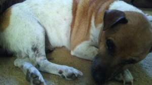 A small dog asleep on the floor.
