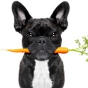 Dog with a carrot in it's mouth.