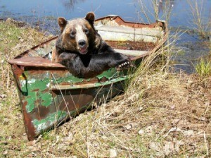 Bear in an old rusty boat on the shore.